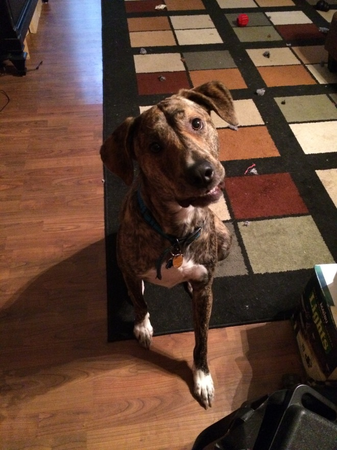 Brindle colored dog with head tilted sideways